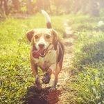 13 redenen voor het nemen van een hondenbuggy