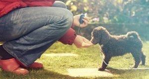 Lees meer over het artikel Wat is clickertraining voor je hond?