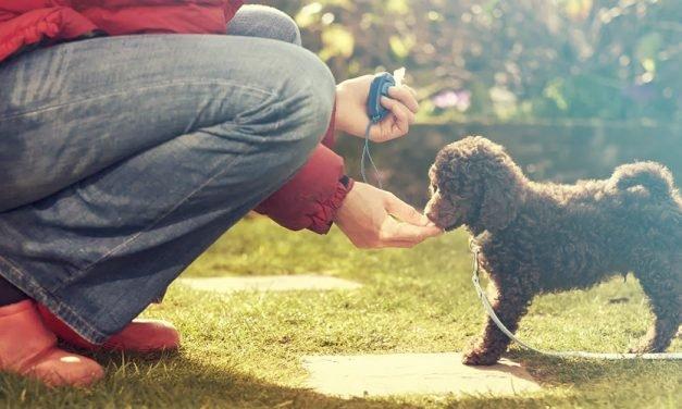 Wat is clickertraining voor je hond?