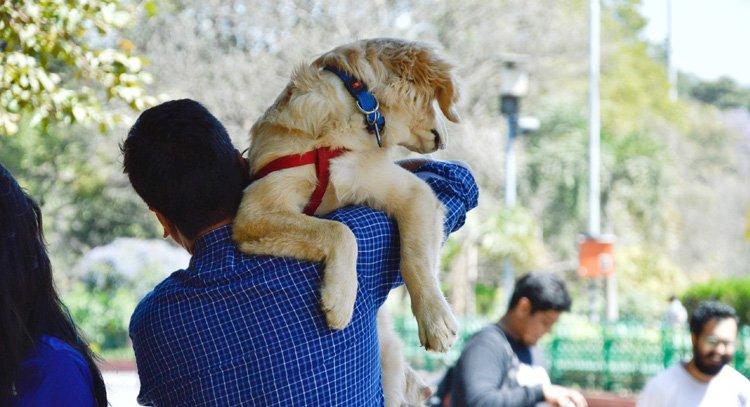 13 redenen voor het nemen van een hondenbuggy 2