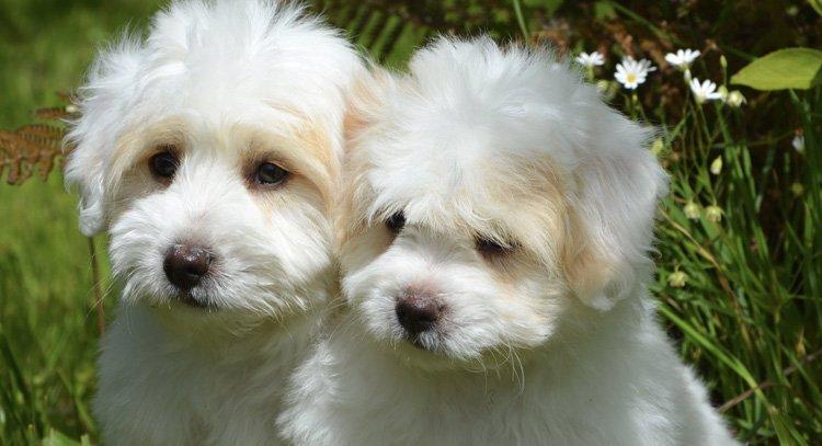 13 redenen voor het nemen van een hondenbuggy 3