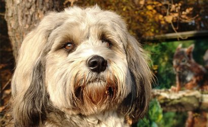 kleine hond West Highland White Terriër