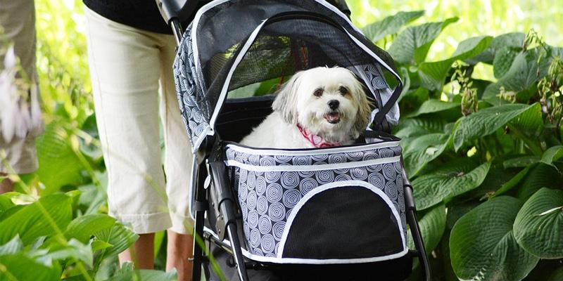 Waarom kiezen voor een hondenfietskar? 1