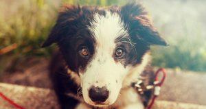 De mijlpalen in het eerste jaar van je puppy