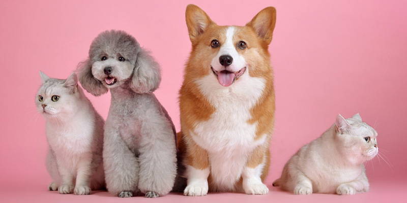 De mijlpalen in het eerste jaar van je puppy 1