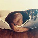 Heeft je hond last van verlatingsangst?