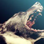 Alles wat je moet weten over een muilkorf voor honden