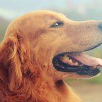 Ringworm hond behandelen? Dit moet je weten